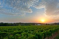 Post Vineyards