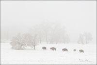 buffalo, arkansas, ice storm, benton county, snow,