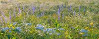 Searles Prairie V