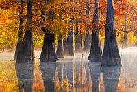 arkansas, swamp, cypress, fog