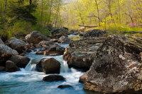 Richland Creek Spring