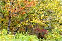 Creekside Fall Color