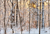 Snow, Ozarks, Buffalo River, Tyler bend, Arkansas, snowfall, sunrise
