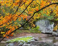 maple trees, richland creek wilderness area, arkansas, fall color