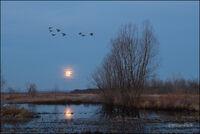 Arkansas, ducks, mallard, Arkansas River, full moon, moonrise