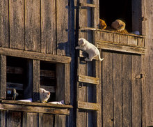 arkansas, cats