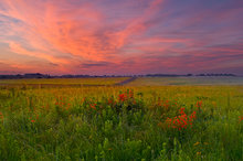 missouri, prairie, royal catchfly, sunrise,