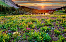 colorado, gold king basin, Uncompahgre National Forest, indian paintbrush, wildflowers, sunset