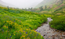 wildflowers, fog, San Juan Mountains, American Basin, colorado