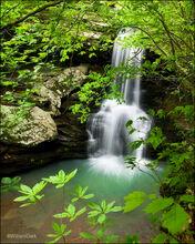 Magnolia Falls IV
