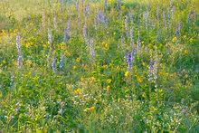 Searles Prairie IV