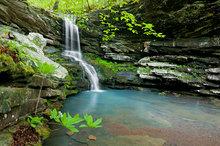 Magnolia Falls I