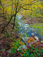 Richland Creek, wilderness area, Big Devil's Fork, Arkansas, fall