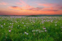 arkansas, , prairie, wildflowers, sunset