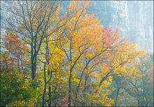 Steele Creek, autumn, fall, Buffalo River
