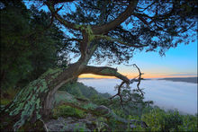 Hedges Pour off, sunrise, Buffalo River, Upper Buffalo Wilderness Area, fog, juniper tree