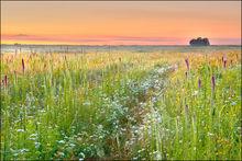 Sunrise, prairie, diamond grove, missouri, blazing star, wildflowers