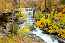 Falling Water Falls, Richland Creek Wilderness,  Arkansas, witch hazel, autumn, fall color.