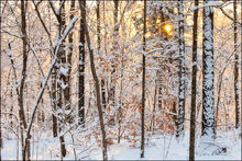 Heavy Snow at Sunrise