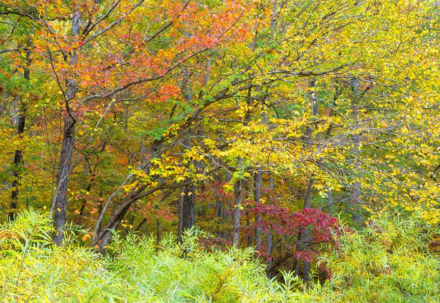 Trees, Richland Creek, fall