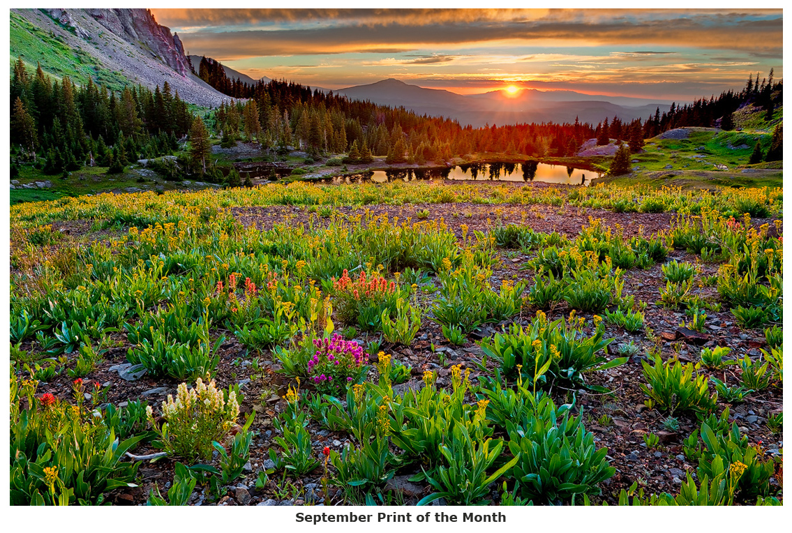 colorado, gold king basin, Uncompahgre National Forest, indian paintbrush, photo