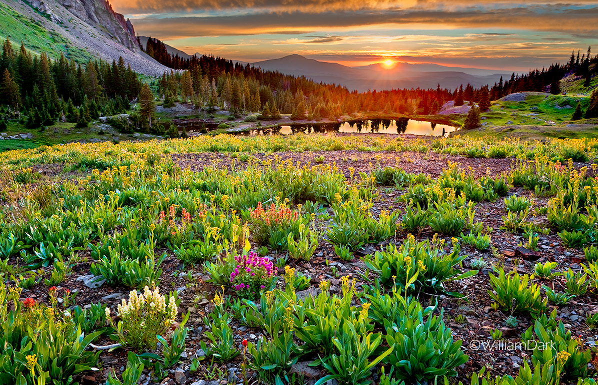 colorado, gold king basin, Uncompahgre National Forest, indian paintbrush, wildflowers, sunset, photo