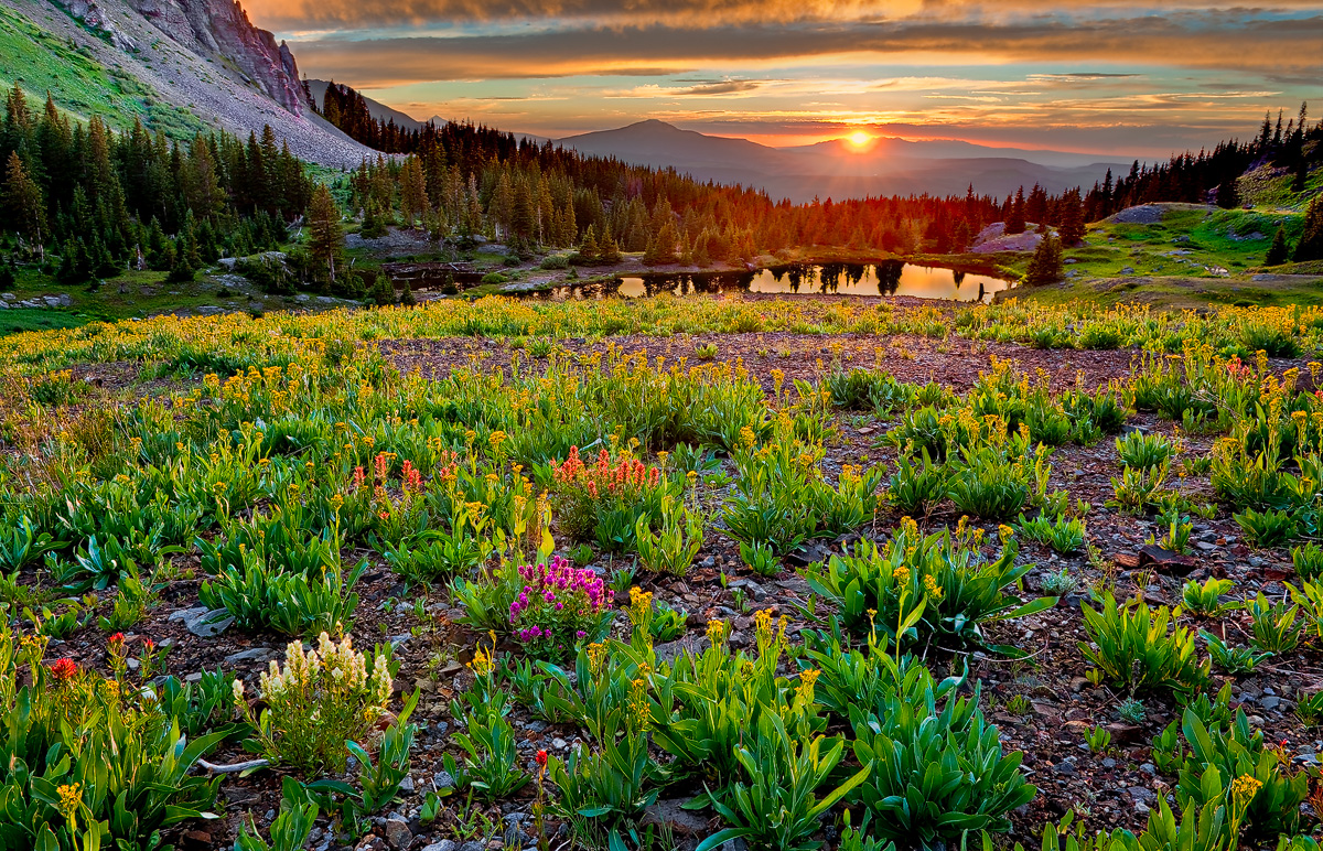 colorado, gold king basin, Uncompahgre National Forest, indian paintbrush