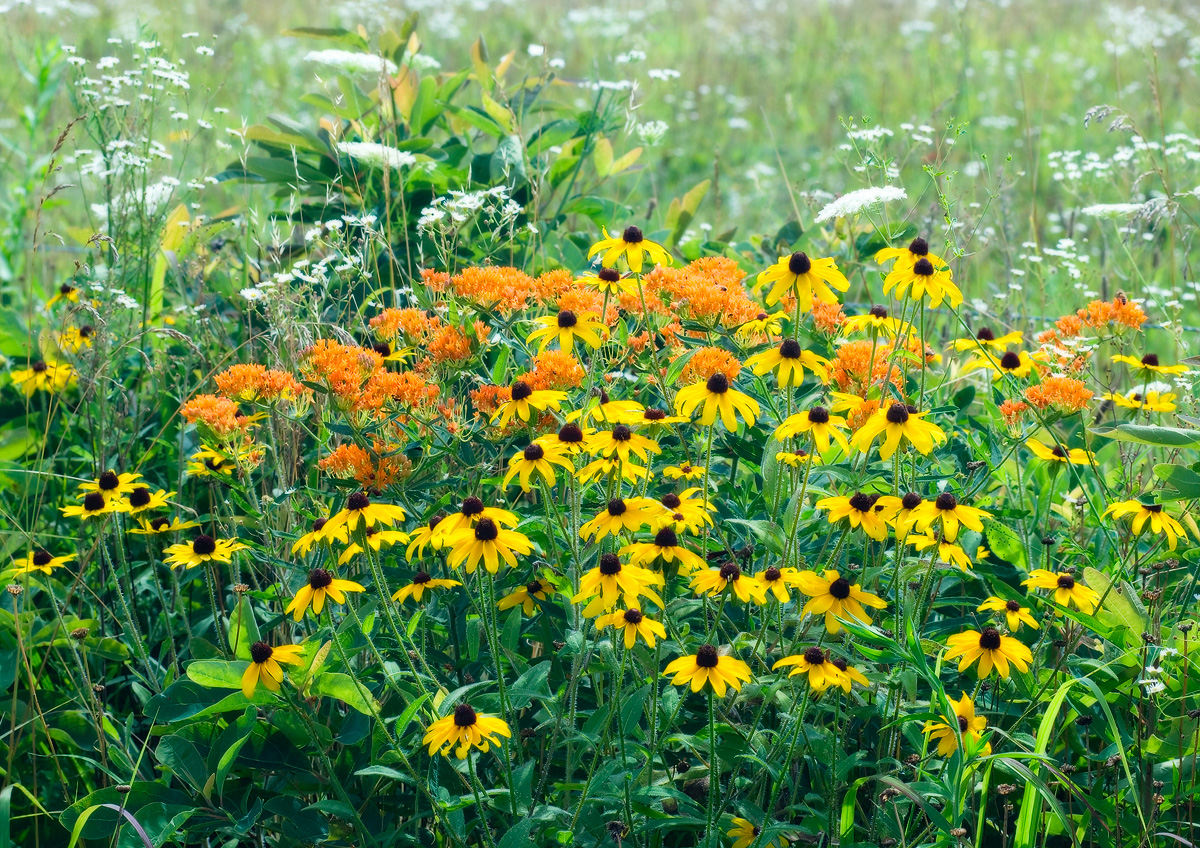 A good year for summer wildflowers.