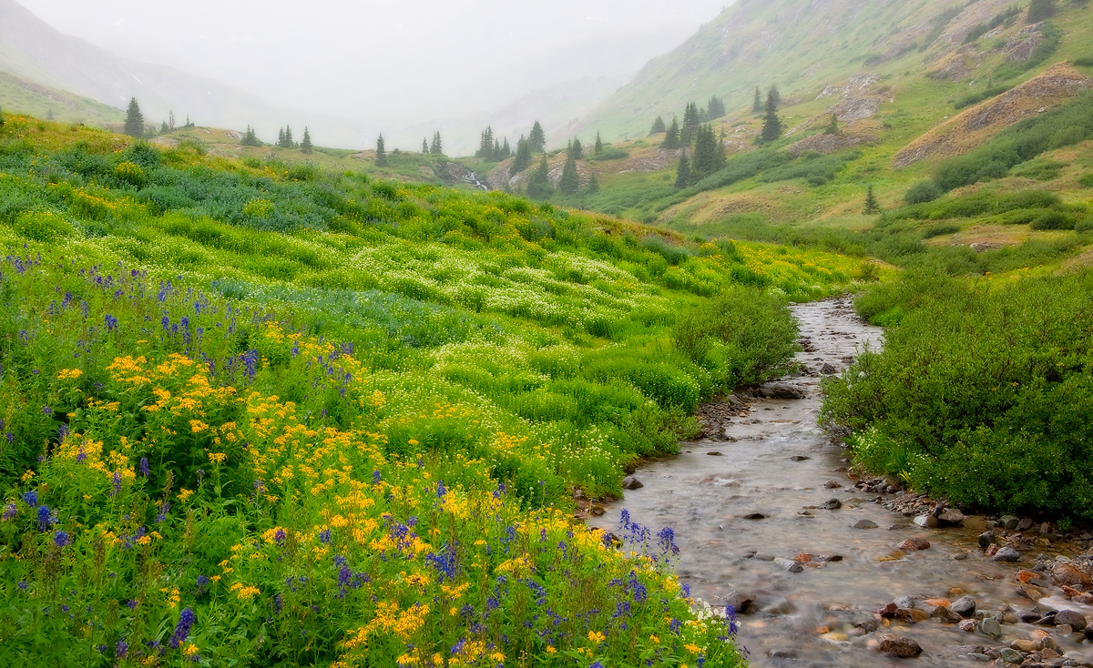 wildflowers, fog, San Juan Mountains, American Basin, colorado, photo