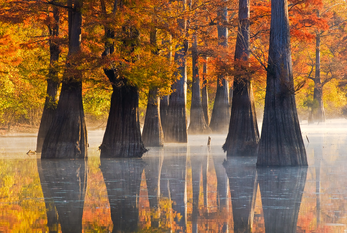 arkansas, swamp, cypress, fog, photo