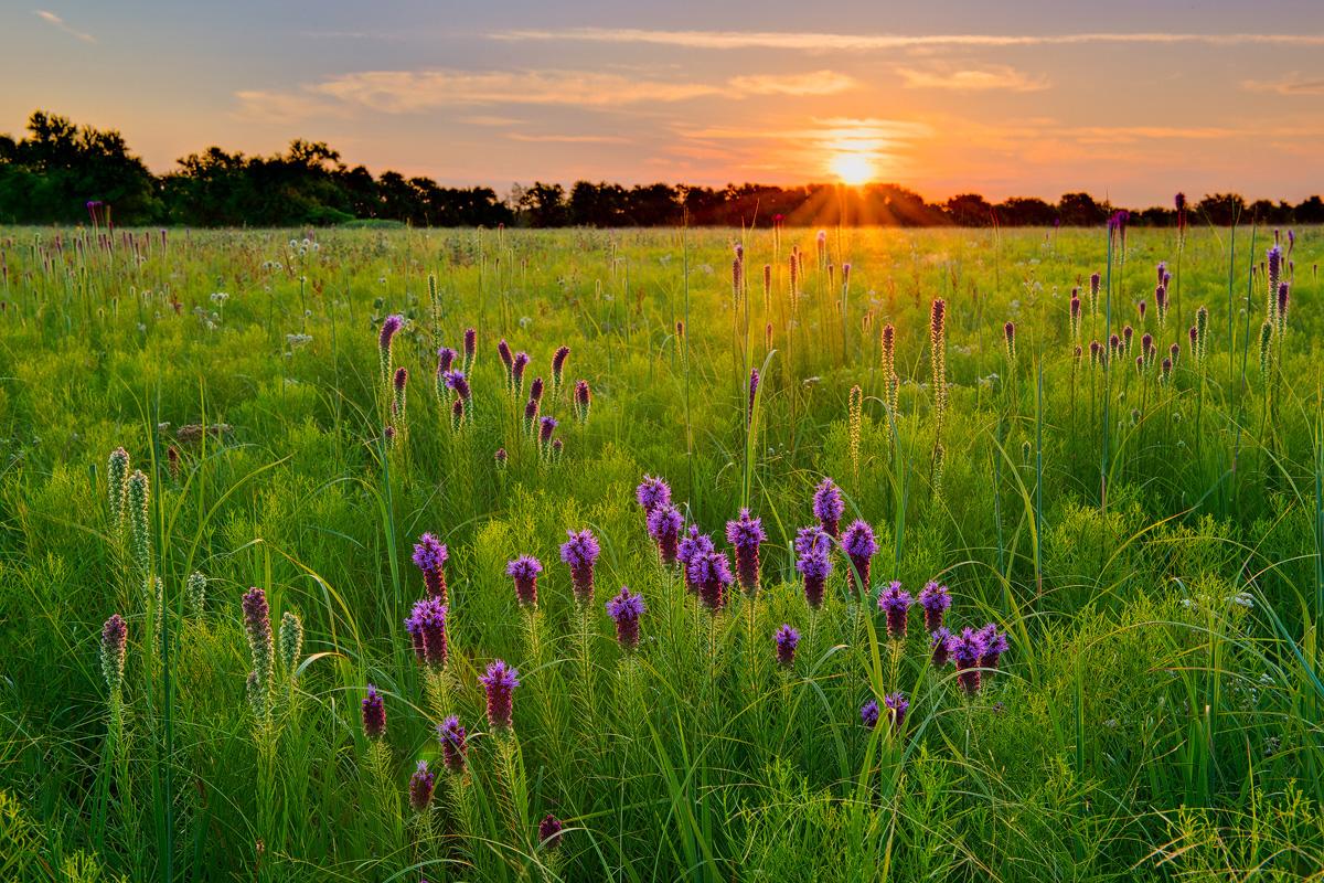 missouri, wah sha she, prairie, sunrise, photo