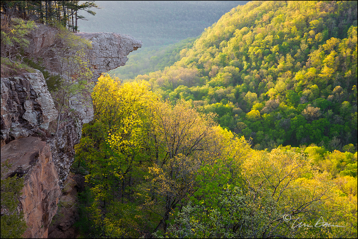 Early morning light floods the landscape with early spring color.