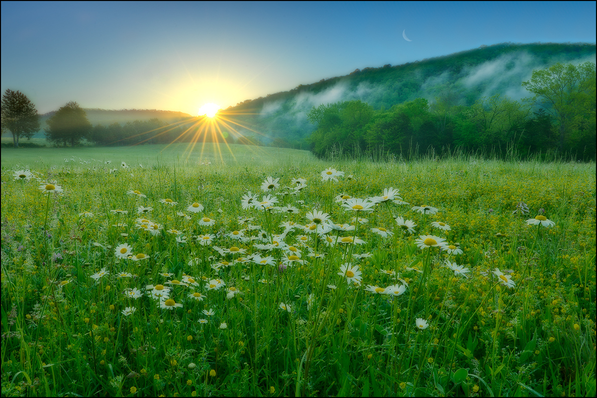 Sunrise, ox-eyed daisies, Boxley Valley, Arkansas, photo