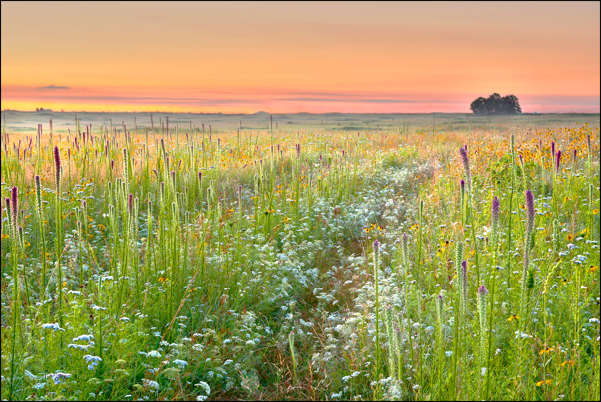 Sunrise, prairie, diamond grove, missouri, blazing star, wildflowers, photo