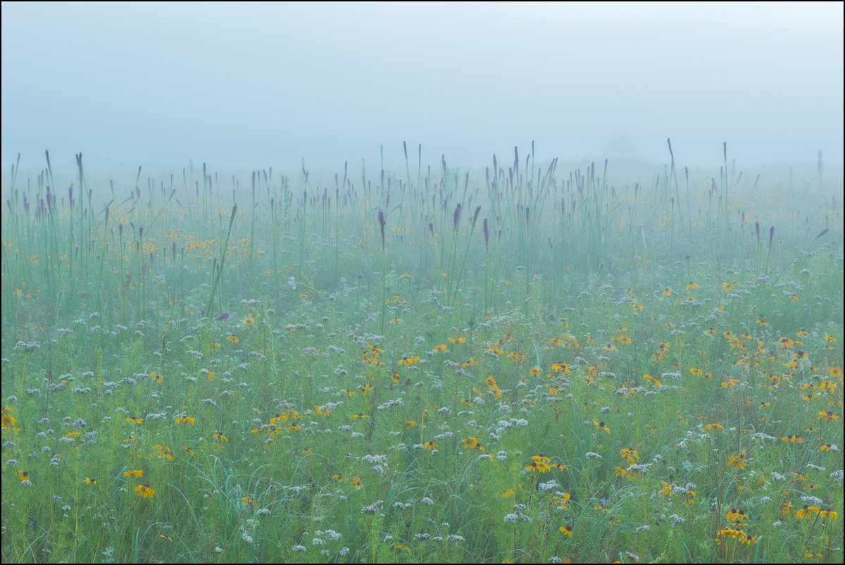 diamond grove, prairie, missouri, blazing star, fog, , photo