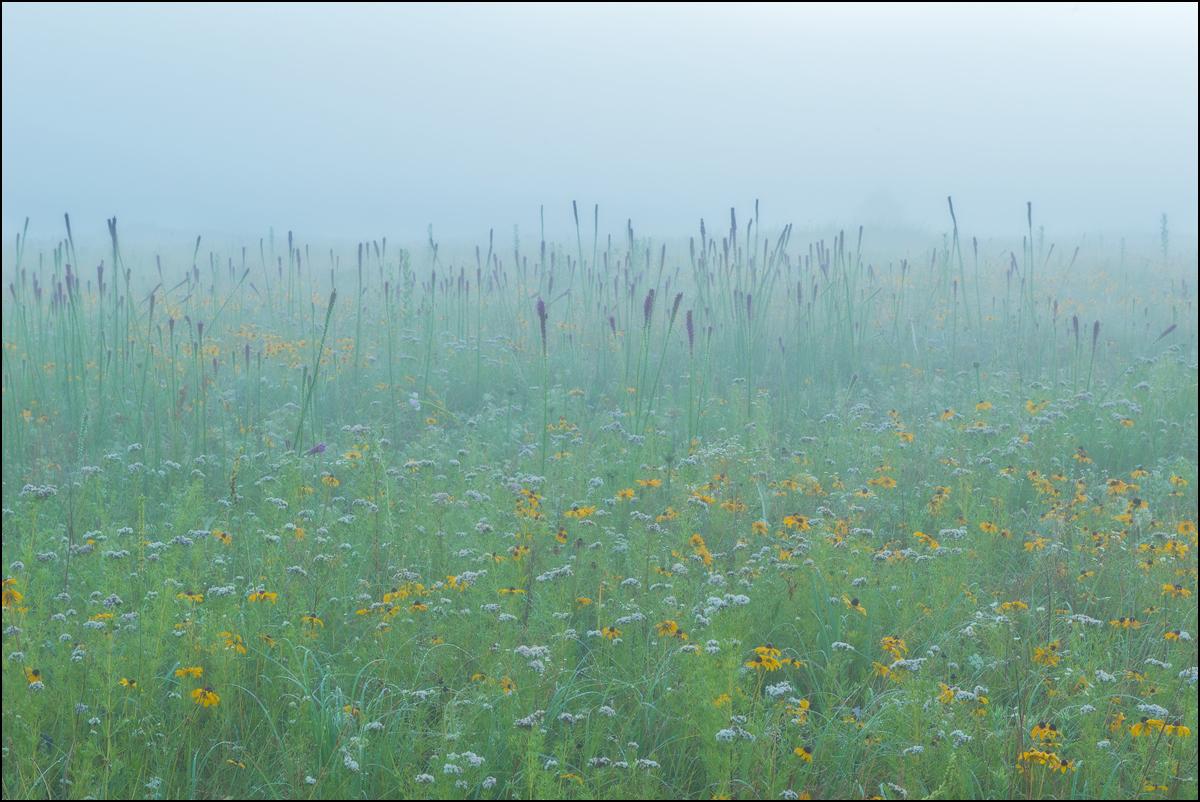 diamond grove, prairie, missouri, blazing star, fog,