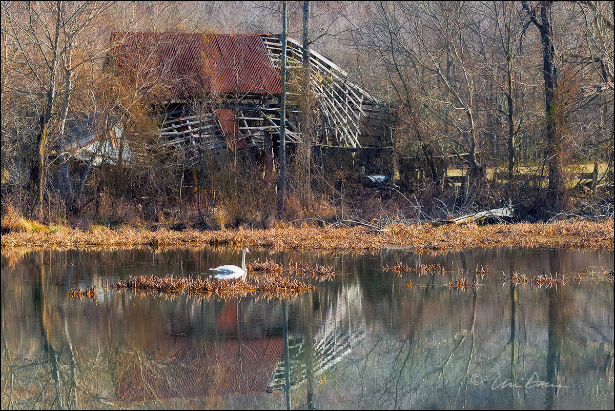 This is a picture of the old barn that once stood behind the mill pond near the Buffalo River in Boxley Valley, Arkansas.  A...