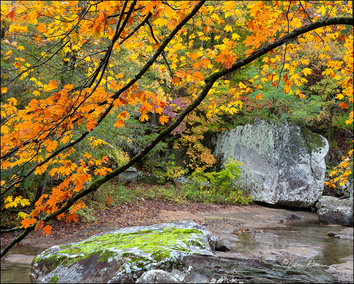 Moss-covered boulders and maple trees along Richland Creek, located in the Ozark Mountains of Arkansas.